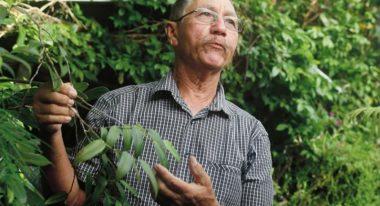 img-Les plantes médicinales de La Réunion