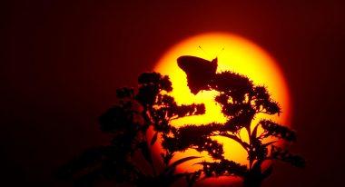 img-Intermèdes Nature / Papillon Belle Dame