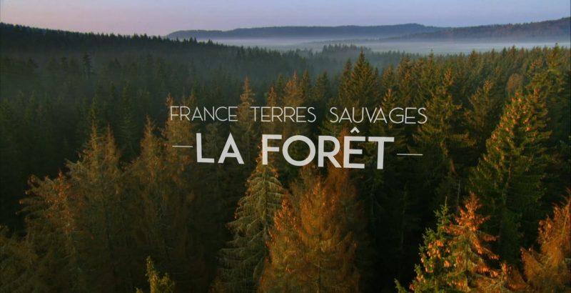 Intermèdes Nature / Le faucon d'Eléonore + France Terres Sauvages : la forêt-2