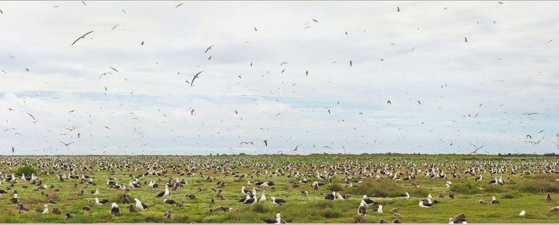 Albatross-2