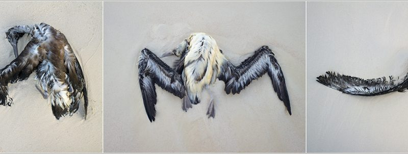 Albatross-3
