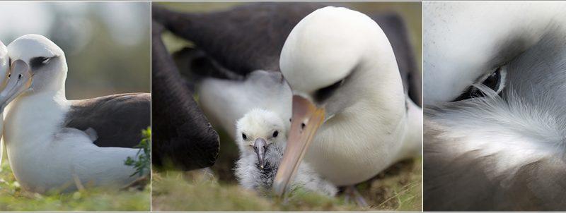 Albatross-4