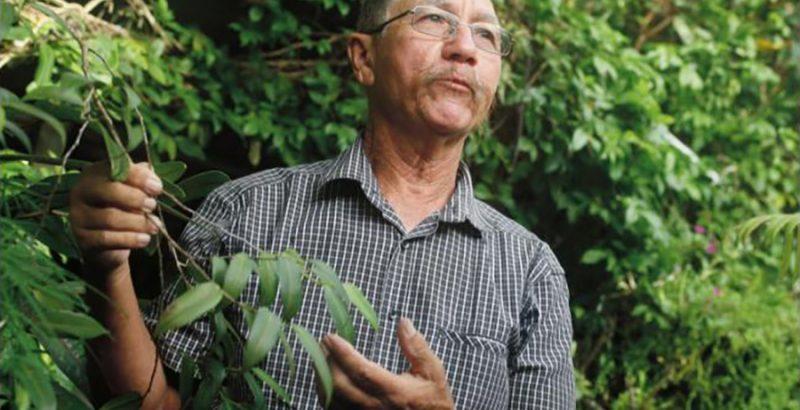 Les plantes médicinales de La Réunion-1