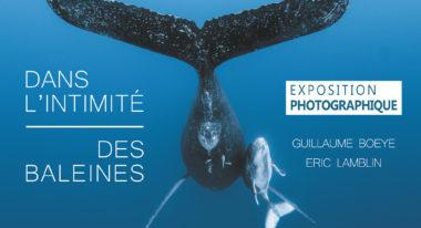 img-Dans l'intimité des baleines