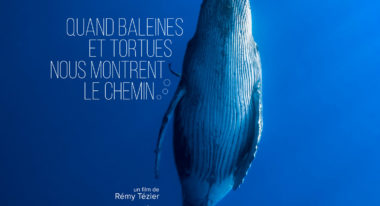 img-Quand baleines et tortues nous montrent le chemin