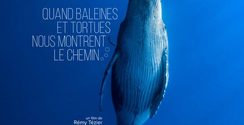 Quand baleines et tortues nous montrent le chemin-1