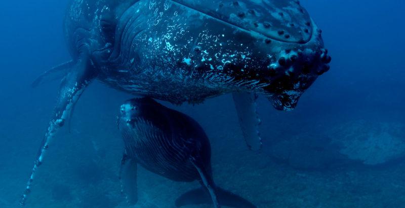 Quand baleines et tortues nous montrent le chemin-5