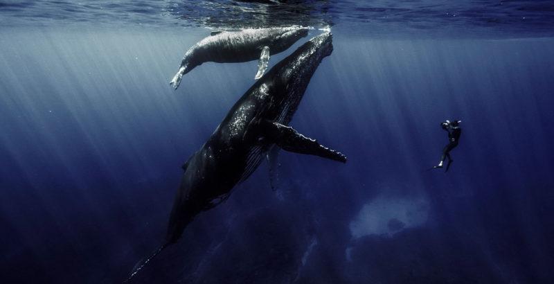 Quand baleines et tortues nous montrent le chemin-4
