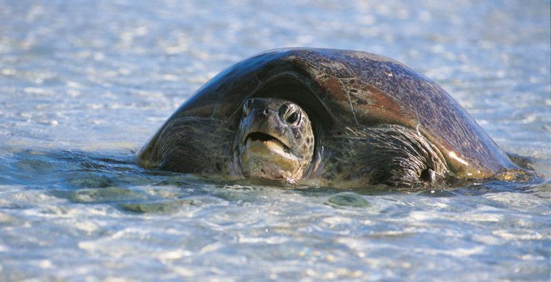 Quand baleines et tortues nous montrent le chemin-2
