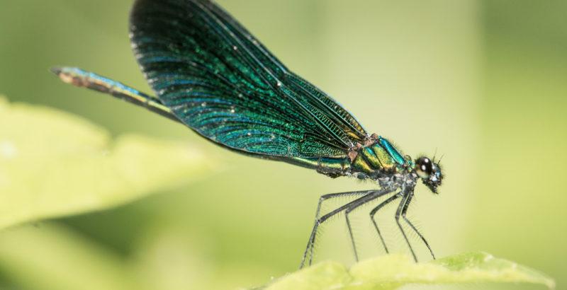 Intermèdes Nature - Dragons et Demoiselles-3