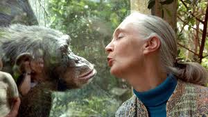 Intermèdes Nature - Jane Goodall : The Hope-5