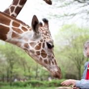 WomanWhoLovesGiraffes