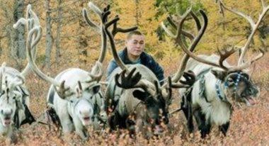 img-Intermèdes Nature - Coup de chaud pour les rennes de Sibérie