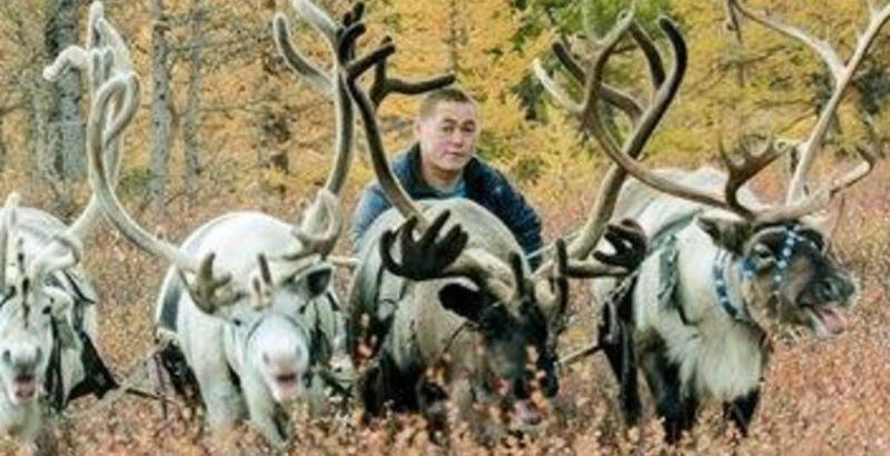 Intermèdes Nature - Coup de chaud pour les rennes de Sibérie-1
